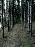 przerażający las Zdjęcie Stock