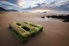 Przerastający z alga drewnianym barłogiem na pięknej piasek plaży n Fotografia Royalty Free