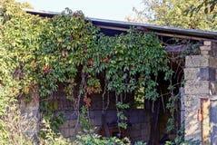 Przerastający z zielonej roślinności starą ogrodową jatą obrazy stock