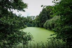 Przerastający z zielonymi algami stawowymi w parku fotografia stock