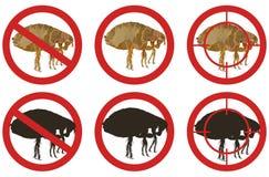 Przerwy pchły znaki Set insekt zarazy kontrola znaki również zwrócić corel ilustracji wektora Fotografia Royalty Free
