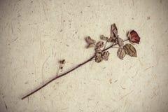 Przerzedżę suszył różanego kwiatu na morwa papieru tle Obraz Royalty Free