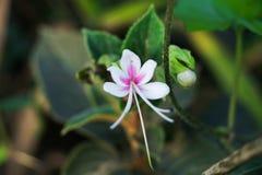 Przerzedże białego kwiatu na błękitnym tło kolorze i inny białym i zielonym obraz royalty free