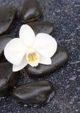 Przerzedże biały orchidei i czerni kamieni zamknięty up Obraz Royalty Free