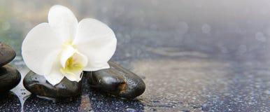 Przerzedże biały orchidei i czerni kamieni zamknięty up Fotografia Royalty Free