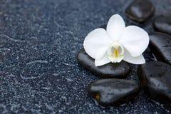 Przerzedże biały orchidei i czerni kamieni zamknięty up Zdjęcie Royalty Free
