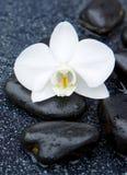 Przerzedże biały orchidei i czerni kamieni zamknięty up Obrazy Stock