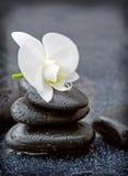 Przerzedże biały orchidei i czerni kamieni zamknięty up Obraz Stock