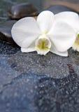 Przerzedże biały orchidei i czerni kamieni zamknięty up Zdjęcia Royalty Free