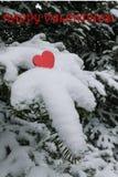 Przerzedże jaskrawe czerwone walentynki kierowe na śnieżnej pogrążonej Balsam jodły gałąź z Szczęśliwym walentynki powitaniem Obraz Royalty Free
