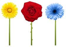 Przerzedże kwiatu zdjęcie royalty free