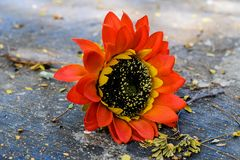 Przerzedże okwitnięcie sztucznego kwiatu lying on the beach fotografia stock