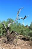 Przesądu pustkowia teren, Maricopa, okręg administracyjny, Arizona, Stany Zjednoczone Obraz Royalty Free