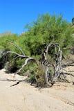 Przesądu pustkowia teren, Maricopa, okręg administracyjny, Arizona, Stany Zjednoczone Zdjęcie Royalty Free