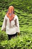 Przesłaniająca kobieta gapi się przy herbacianymi plantacjami Zdjęcie Royalty Free