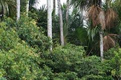 Przesłodzony Dżungla jezioro Landcape Obrazy Royalty Free