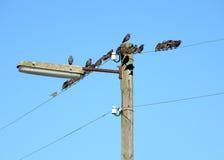Przesiedleńczy ptaki Zdjęcie Stock