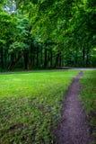 Przesmyk błotnista ścieżka otaczająca trawą w Haagse Bos, las w T obrazy royalty free