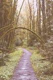 Przesmyka błotnisty droga przemian w lesie obraz royalty free