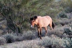 Przespacerowanie w pustyni zdjęcie stock