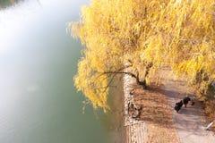 Przespacerowanie wzdłuż banków Drava rzeka obraz stock
