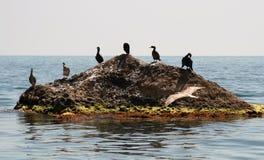 przestań wyspy ptak Fotografia Royalty Free