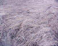 Przestrzeń sucha trawa z lilym brzmieniem obraz stock