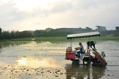 Przeszczep ryżowa sadzonkowa maszyna obrazy royalty free