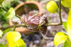 Przeszczepia drzewnego punkt Fotografia Stock