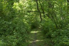 Przetarty wycieczkuje ślad w lesie fotografia royalty free