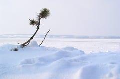 przetrwać zimę Obraz Royalty Free