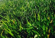 przetwarza się zielone Fotografia Royalty Free