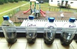 Przetwarzający plastikowy butelki terrarium fotografia royalty free