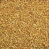 Przetwarzający arachidy Fotografia Stock