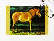 Przewalski's Horse (Equus przewalskii), Rare animals; small format serie, circa 1972. MOSCOW, RUSSIA - NOVEMBER 10, 2018: A stamp printed in Umm Al Quwain royalty free stock photo