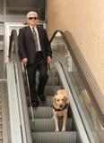 przewdonika niewidomy psi mężczyzna obrazy stock