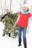 przewożenia bożych narodzeń pary seniora śniegu drzewo Obrazy Stock