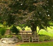 przewodniczy drzewa Zdjęcie Royalty Free