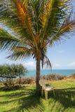 Przewodniczy underneeth drzewko palmowe z widokiem nad oceanem - best fotografia royalty free