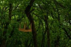 Przewodzący dzięcioł produkuje jedzenie w lasowych ficker wykopalisk dżdżownicach w parku zdjęcie stock