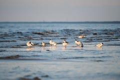 Przewodzący frajery zbliżają morze zdjęcia stock