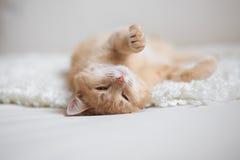 Przewodzący kot Zdjęcia Royalty Free