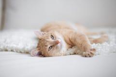 Przewodzący kot Obrazy Royalty Free