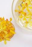 przewodzi storczykowego kolor żółty Zdjęcie Royalty Free