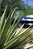 przez Arizona jeżdżenie Fotografia Royalty Free