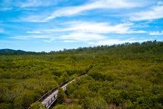 przez bridżowych mangrowe obrazy royalty free