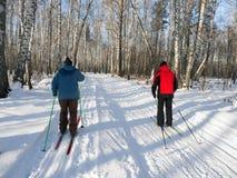 Przez cały kraj narciarstwo w lesie na słonecznym dniu Brzozy lasowy Zdrowy styl życia widok z powrotem obraz stock