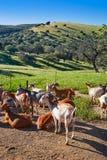 Przez De Los angeles Plata sposobu kózek sierra Norte Seville Zdjęcia Stock