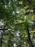 Przez drzew Obraz Stock