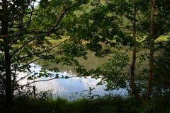 Przez drzew Fotografia Royalty Free